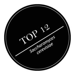 Top_12_FW.jpg